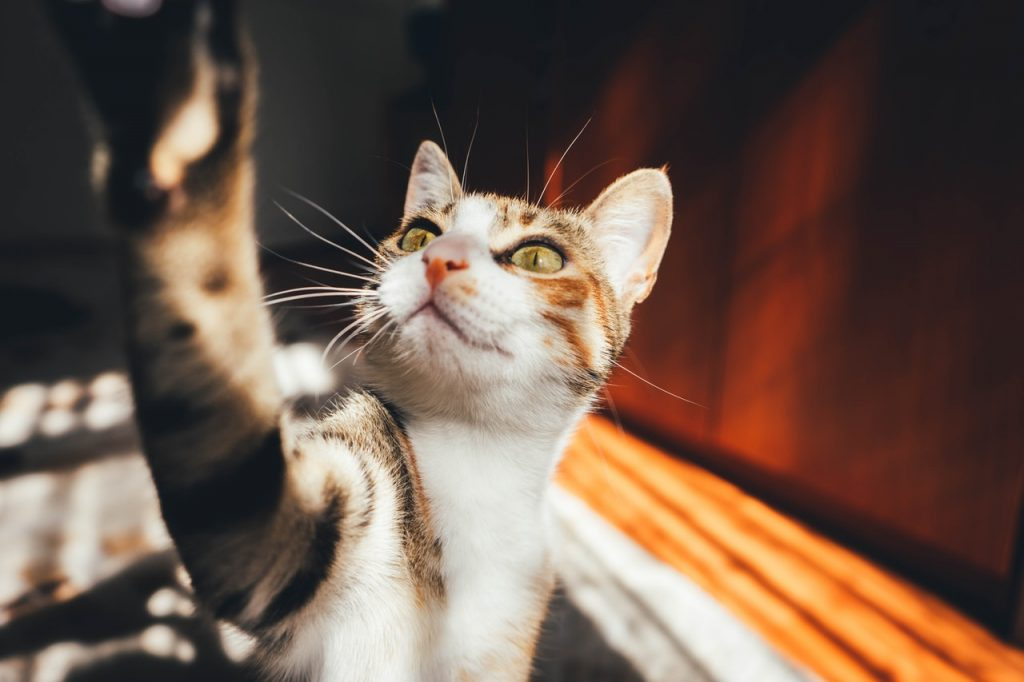 KVV voer voor jouw trouwe kat